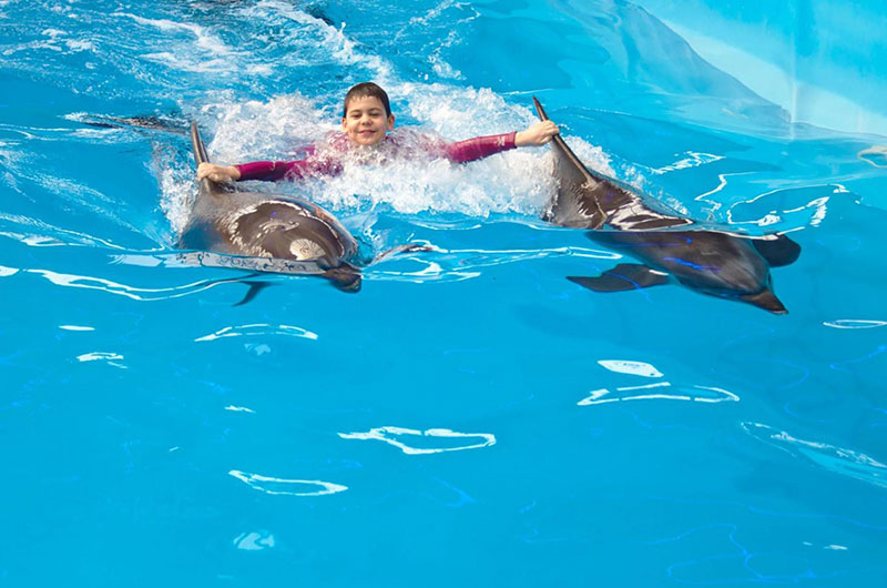 Swim With Dolphins Excursion in Sharm el Sheikh